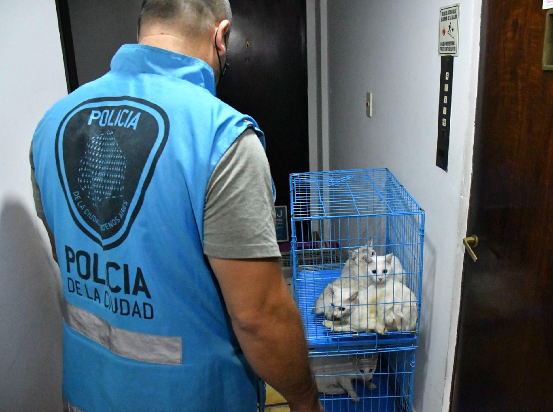 Horror en Villa Crespo: siete gatos muertos en una heladera