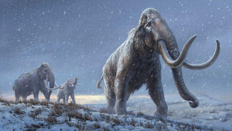 El resultado sería un híbrido elefante-mamut genéticamente modificado, cultivado en un útero artificial en un laboratorio