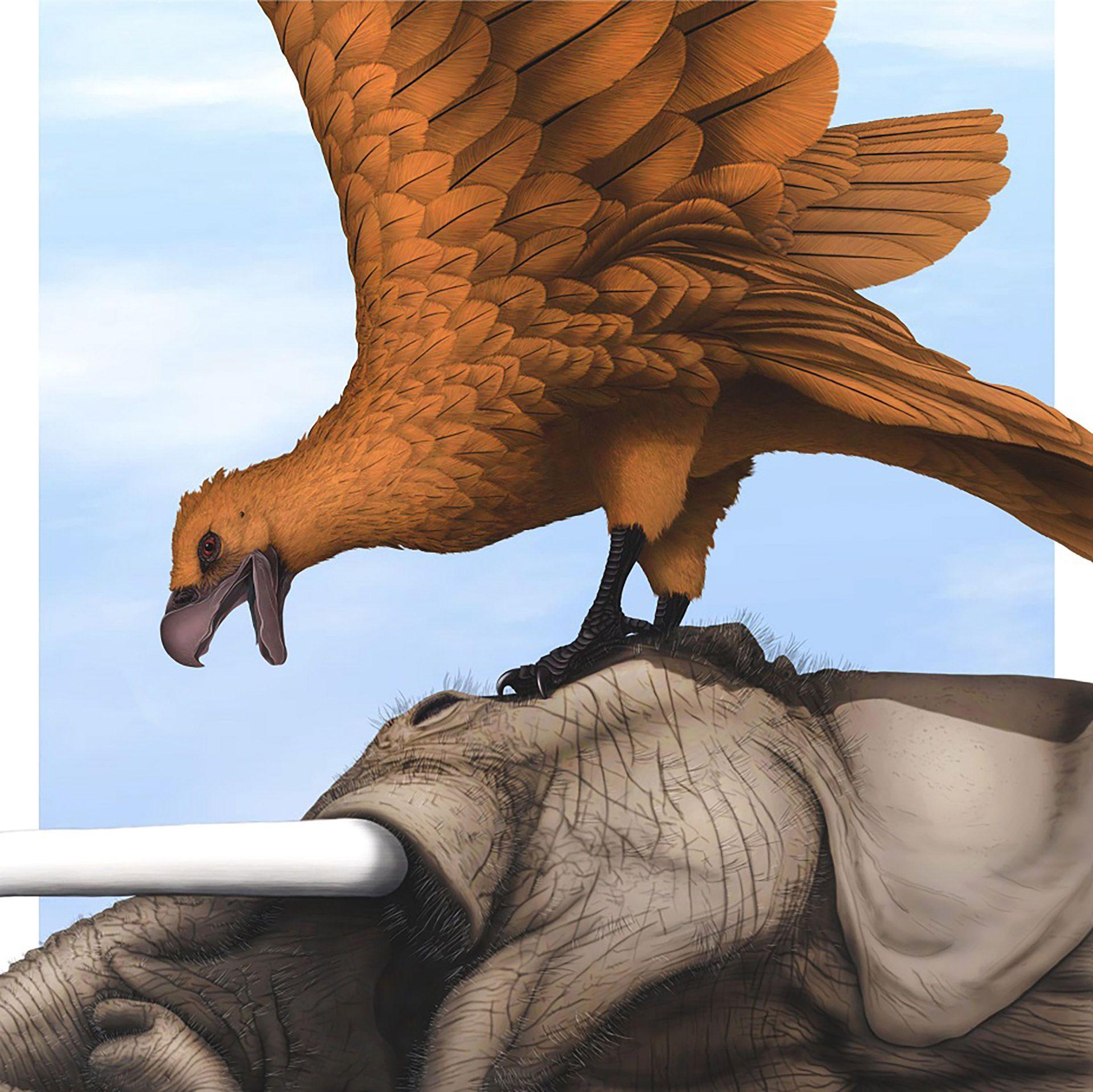 En Argentina, descubrieron los fósiles de las aves voladoras más gigantescas  de todos los tiempos - Noticias de Bariloche